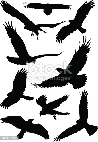 The silhouette of wild birds