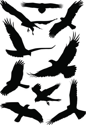 Silhouettes of wild birds in flight
