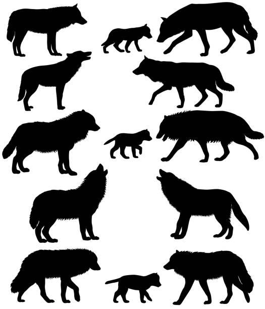illustrazioni stock, clip art, cartoni animati e icone di tendenza di silhouettes of wolves and wolf-cubs - lupo