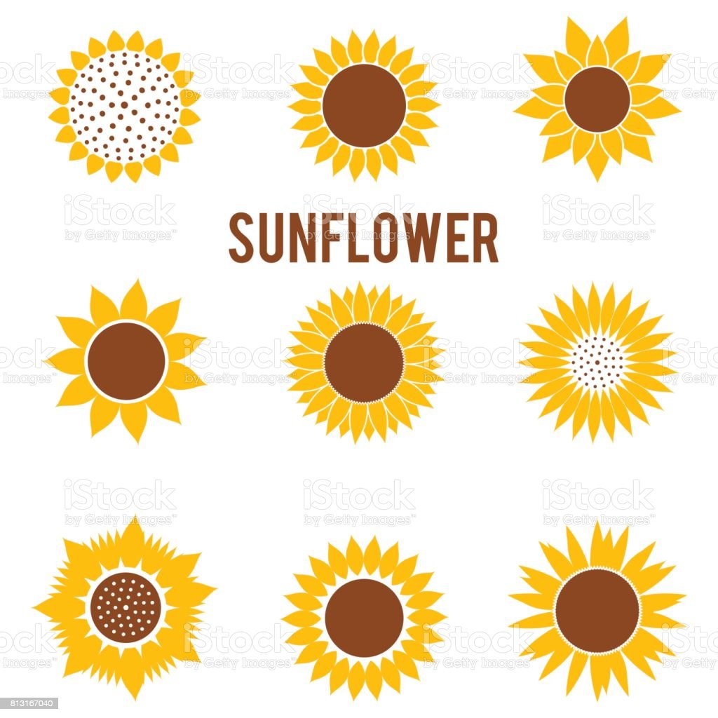 silhouettes of yellow flowers in a flat style beautiful sunflower rh istockphoto com sunflower vector free download sunflower vector watercolor