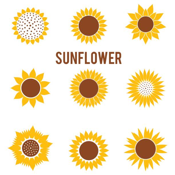 silhouettes of yellow flowers in a flat style. beautiful sunflower icons isolated on white background. - sunflower stock illustrations