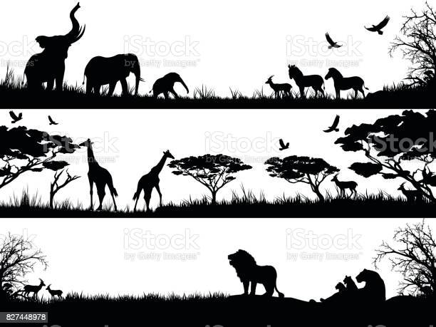 Silhouettes set of african wild animals in nature habitats vector id827448978?b=1&k=6&m=827448978&s=612x612&h=0xliqcc61l00f6pcugfm3 r1mddofkrmbnskkzx2s7g=