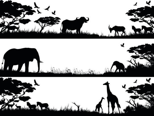 Giraffe Black And White Illustrations, Royalty-Free Vector ...