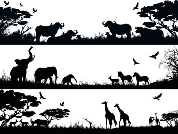 Best Giraffe Black And White Illustrations Royalty Free