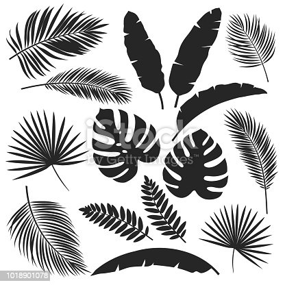 Set vector silhouettes tropical leaves. Monochrome jungle exotic leaf philodendron, areca palm, royal fern, banana leaf. Illustration for summer tropical paradise advertising design vacation.