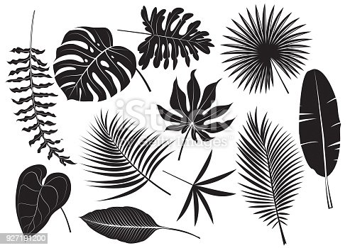 Vector silhouettes tropical plants
