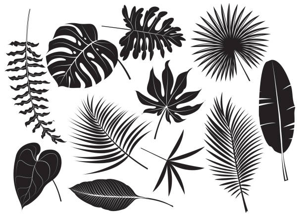 illustrazioni stock, clip art, cartoni animati e icone di tendenza di silhouettes tropical plants - foglie