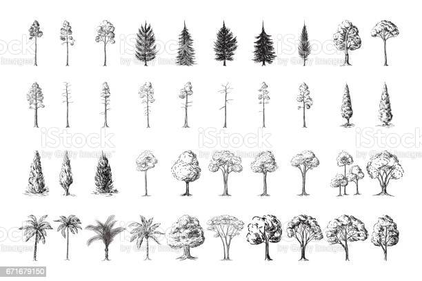 Free cedar Images, Pictures, and Royalty-Free Stock Photos