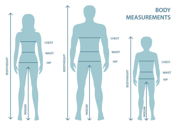 illustrazioni stock, clip art, cartoni animati e icone di tendenza di silhouttes di uomo, donna e ragazzo a figura intera con linee di misura dei parametri del corpo. - il corpo umano