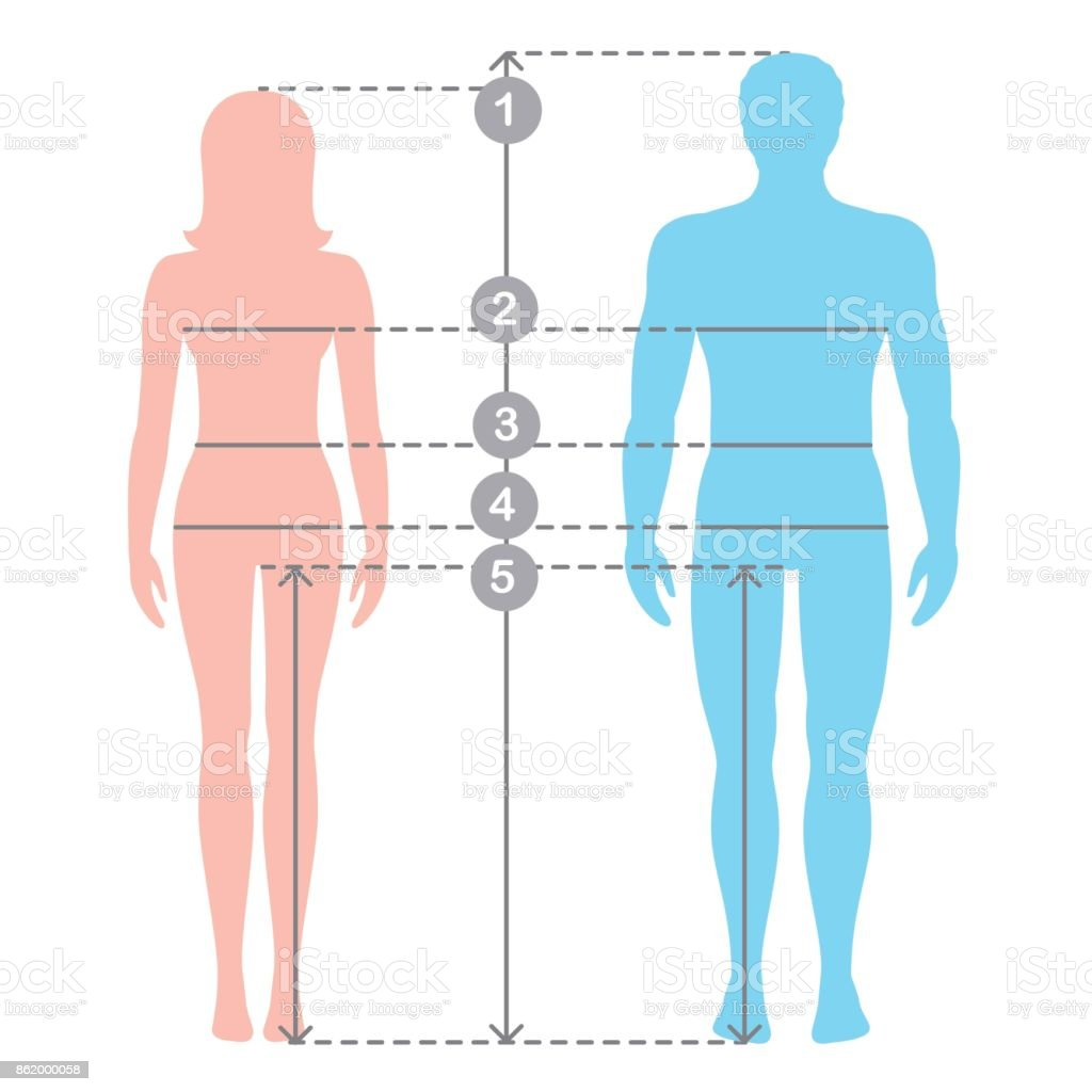 Silhuettes Of Man And Women In Full Length With Measurement Lines Of ...