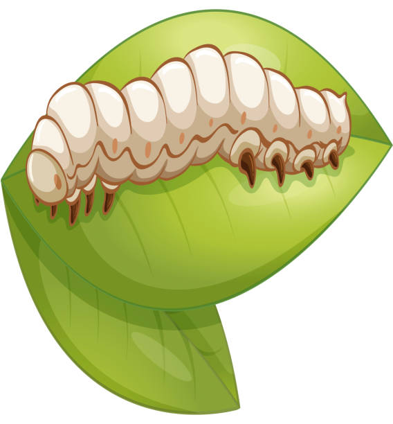 stockillustraties, clipart, cartoons en iconen met silkworm - zijdeworm