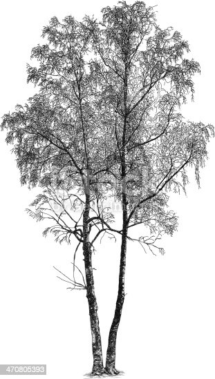 Birch tree vector illustration. Additional EPS file contains the same image with lines in stroke form, allowing you to convert to a brush of your choosing. Colors are layered and grouped separately. Easily editable.