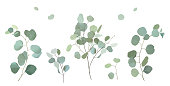 Silver dollar eucalyptus selection branches vector design set. Wedding greenery. Mint, blue, green tones. Watercolor style collection. Mediterranean evergreen tree. Isolated and editable