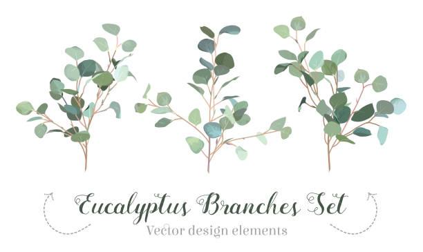 silberdollar eukalyptus auswahl zweige vektor designset. - laub winter stock-grafiken, -clipart, -cartoons und -symbole