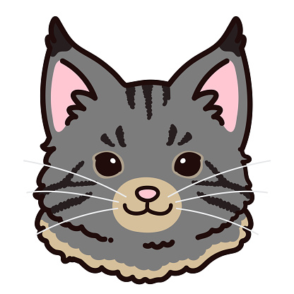 Simple and adorable Grey Maine Coon cat front face outlined