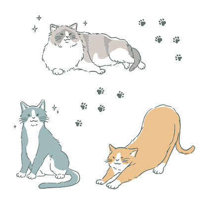 Simple and fashionable cat illustration set