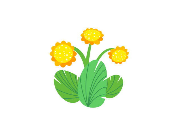 simple bouquet vector with spring garden blooming flowers illustration. fashion floral springtime nature plant elements isolated on white background in minimal style - spring fashion stock illustrations, clip art, cartoons, & icons