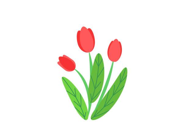 bildbanksillustrationer, clip art samt tecknat material och ikoner med enkel bukett vektor med våren trädgård blommande blommor illustration. isolerade på vit bakgrund i minimalistisk stil mode blommig springtime natur växt beståndsdelar - tulpaner