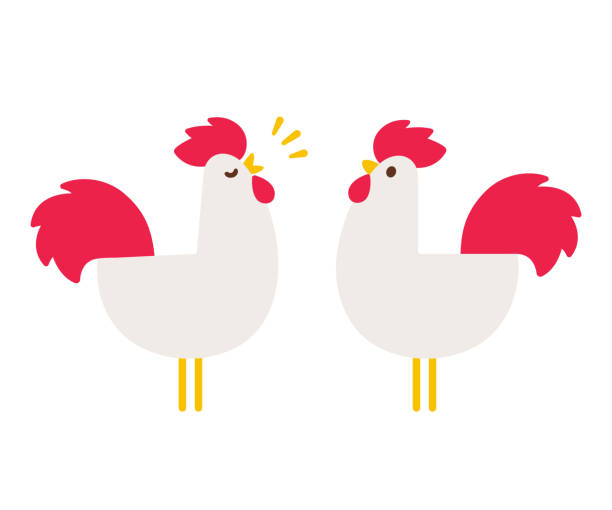 Simple cartoon rooster Cartoon rooster drawing in simple flat vector style. Cute crowing cock illustration. poultry stock illustrations