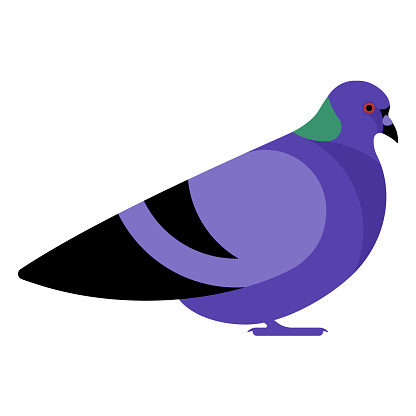 Simple city pigeon. Dove. Lilac bird, side view, profile. Symbol of peace and kindness.