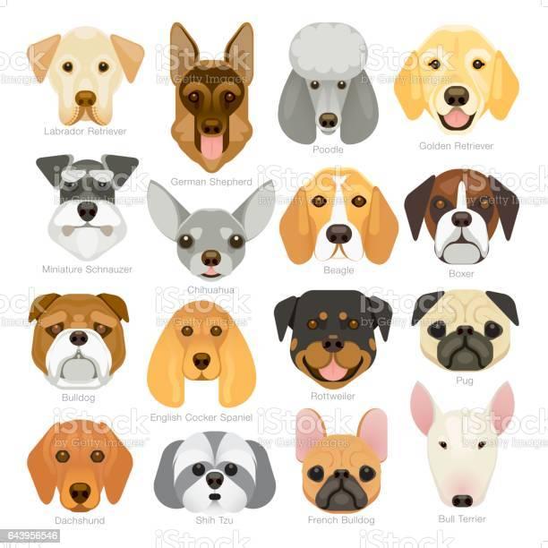 Simple graphic popular dog breeds icon set vector id643956546?b=1&k=6&m=643956546&s=612x612&h=tob4 vvzqgruleymweqsu7i8lxlj1ueoszqpfptqjp0=