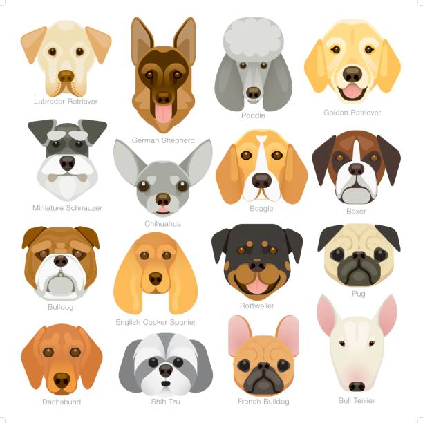 simple graphic popular dog breeds icon set vector art illustration