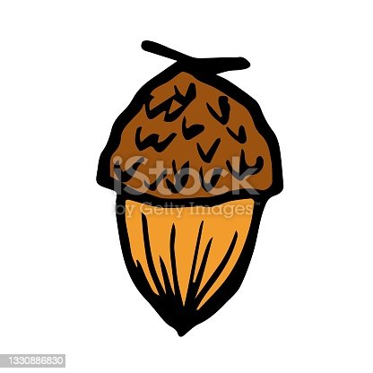 istock Simple hand-drawn color vector drawing. Acorn isolated on white background, oak seeds, forest plants. For prints, labels, nature, autumn design. 1330886830