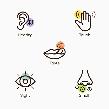 Simple icons with color accent for the basic five human senses - hearing, touch, taste, sight and smell. Easy to use for your website or presentation.