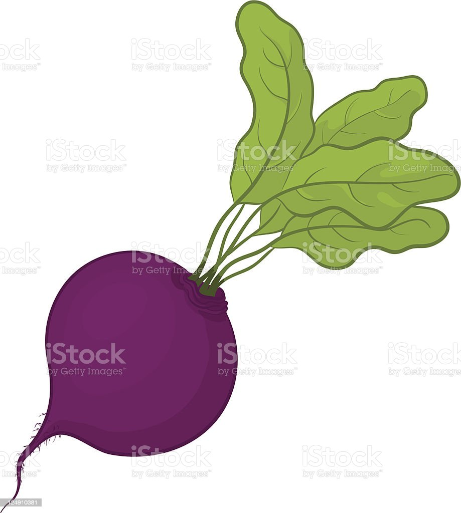 A simple illustration of beetroot with leaves vector art illustration
