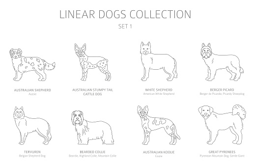Simple line dogs collection isolated on white. Dog breeds. Flat style clipart set