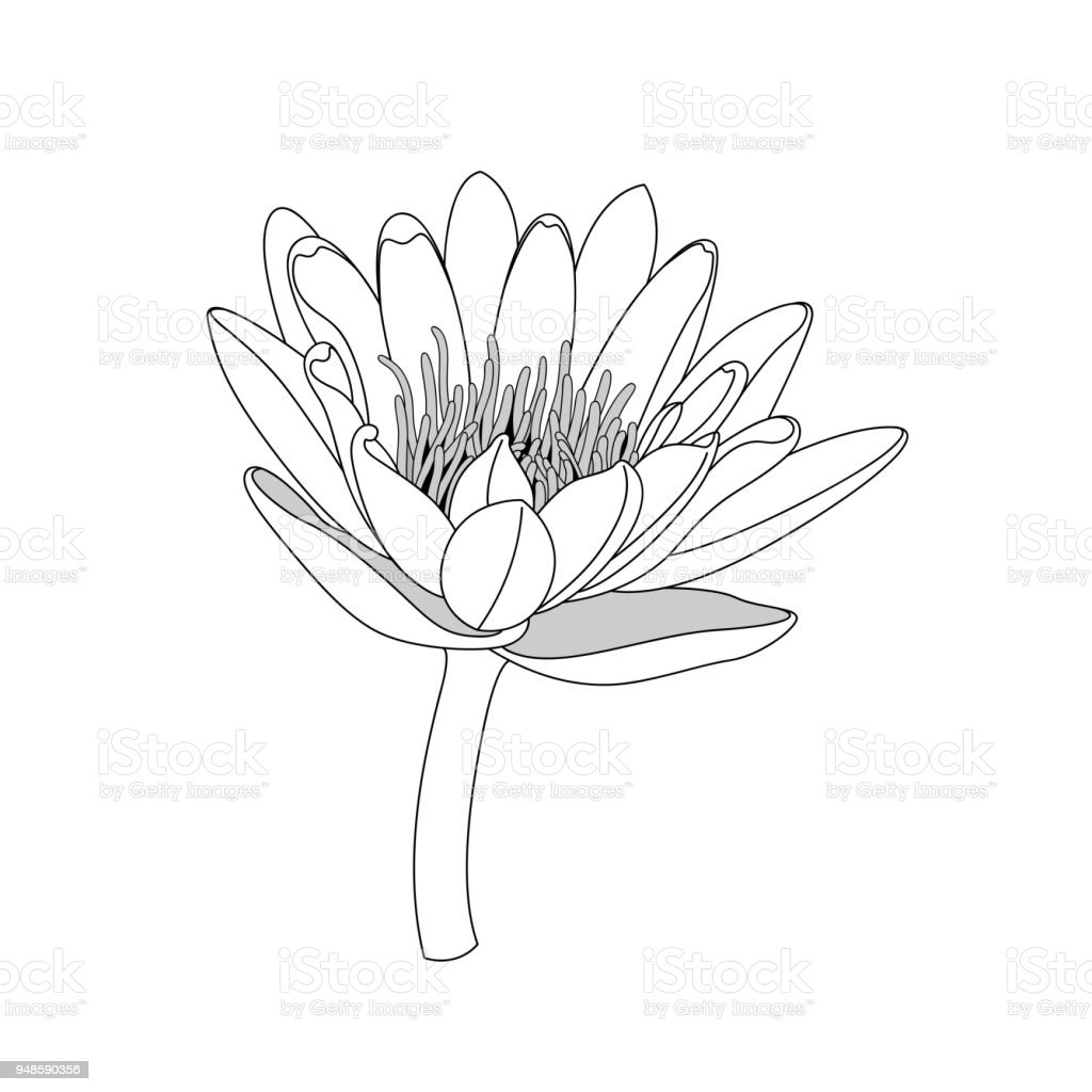 Simple Line Lotus Flower Black And White Isolated Hand Draw Lines Strokes