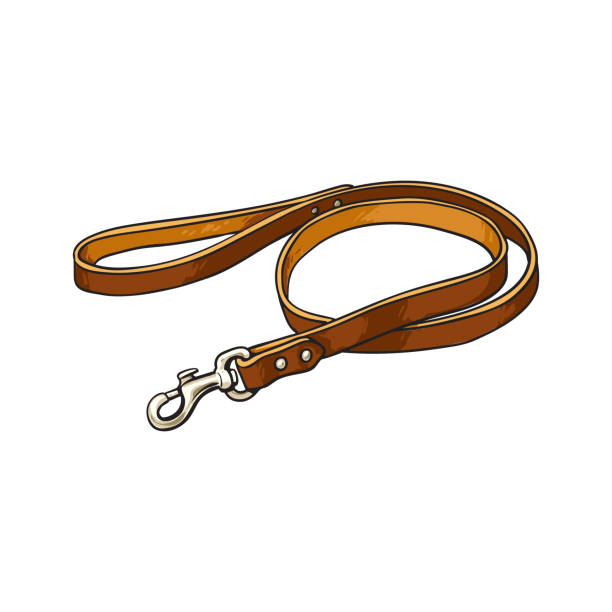 Royalty Free Leash On White Clip Art, Vector Images ...