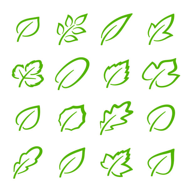 illustrazioni stock, clip art, cartoni animati e icone di tendenza di simple set of linear green leaves vector icons. contains such vector icons as oak leaf, currant leaf, strawberry leaf, ash leaf and others - erba medica