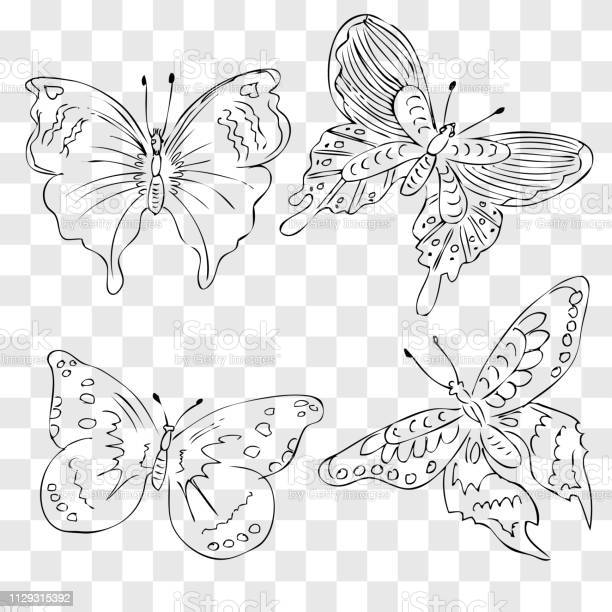 Simple sketch four different wing motif butterfly at fake transparent vector id1129315392?b=1&k=6&m=1129315392&s=612x612&h=5rxtfmnaiftbbr3ukmx2whstvxjjfgze721j vbjnqu=