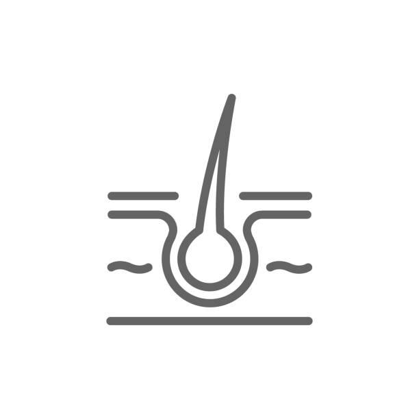 ilustraciones, imágenes clip art, dibujos animados e iconos de stock de simple icono de línea piel y el cabello. símbolo y signo vector ilustración diseño. movimiento editable. aislado sobre fondo blanco - dermatología