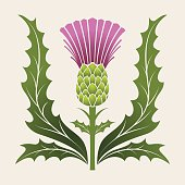 Simple Stencil Style Scottish Thistle In Pink Purple And Green
