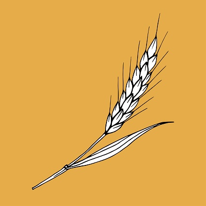 Simple vector drawing. White spike of wheat on a brown background. Cereals, harvest, ear. For stickers, labels, flour products, bread.