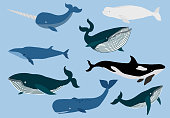 Simple whale character.Vector illustration character doodle cartoon