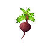 Single beetroot with haulm isolated on white background. Natural root. Juicy vegetable ingredient for food. Organic food, autumn harvest, agricultural