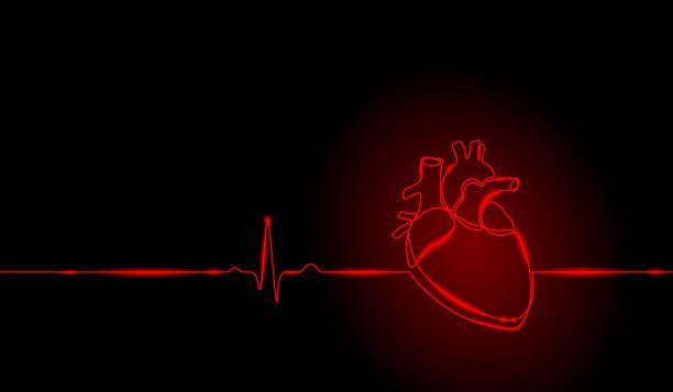 ilustrações de stock, clip art, desenhos animados e ícones de single continuous line art anatomical human heart silhouette. healthy medicine concept design neon glow red one sketch outline drawing vector illustration - coração humano