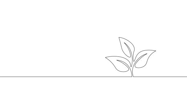 Single continuous line art growing sprout. Plant leaves seed grow soil seedling eco natural farm concept design one sketch outline drawing vector illustration Single continuous line art growing sprout. Plant leaves seed grow soil seedling eco natural farm concept design one sketch outline drawing vector illustration art single object stock illustrations