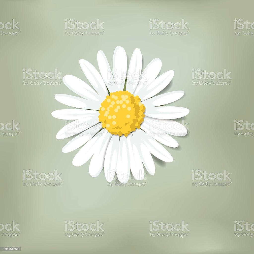 Single daisy on green background (Loves me, loves me not) vector art illustration