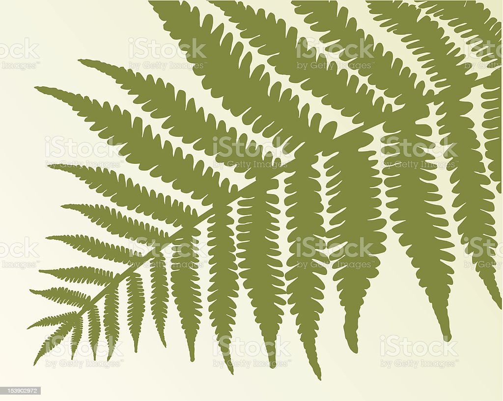 Single fern frond royalty-free stock vector art
