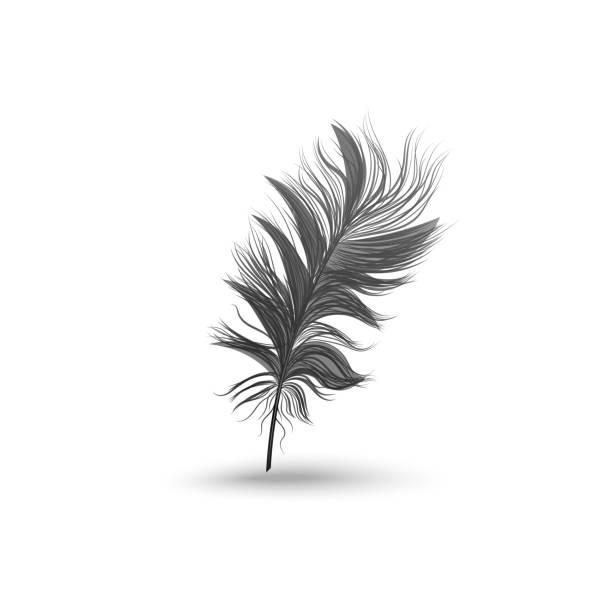 stockillustraties, clipart, cartoons en iconen met enkele pluizige zwarte veer vallen of zweven rechtop realistische stijl - stekels