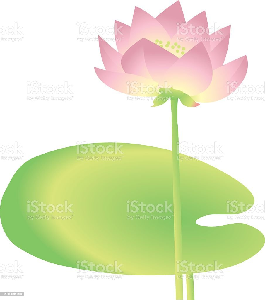 single  lotus decorative floral element. vector illustration vector art illustration