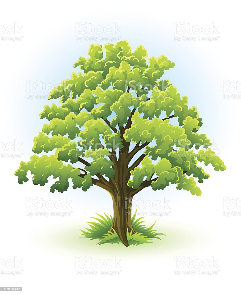 single oak tree with green leafage royalty-free single oak tree with green leafage stock vector art & more images of backgrounds