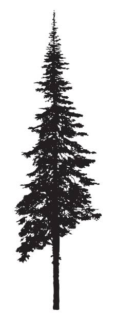 Top 60 Pine Tree Clip Art, Vector Graphics and ...