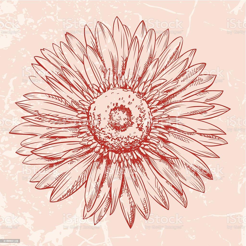 Single red gerbera daisy flower head pen texured ink drawing stock single red gerbera daisy flower head pen texured ink drawing royalty free single red gerbera izmirmasajfo