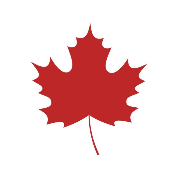 Single red maple leaf icon Single red maple leaf on white background. Vector maple leaf isolated. maple leaf stock illustrations