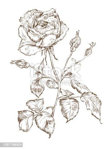single rose engraving vector monochrome